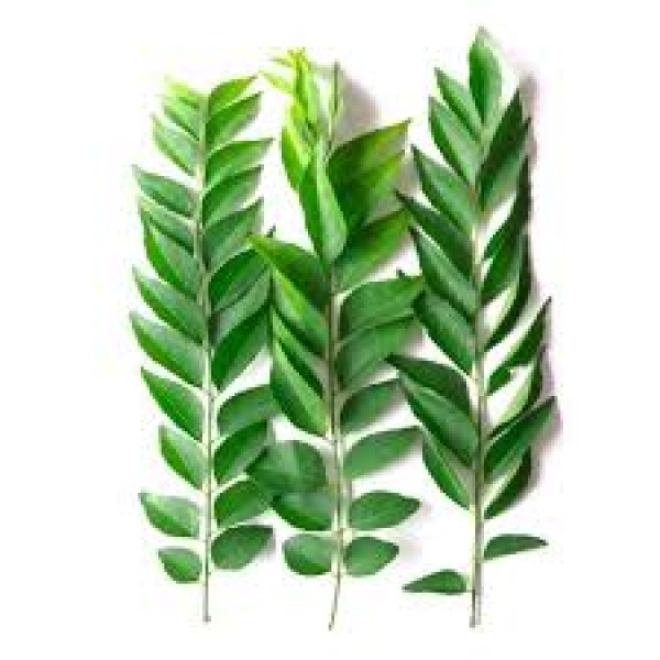Fresh CURRY LEAVES LARGE PKT $/Each