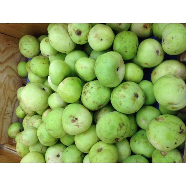 Fresh PUNJABI TINDA (SEASONAL) $/Lb